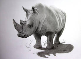 Rhino wildlife pencil drawing by conty0