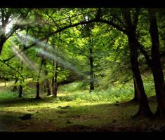 Forest rays by AidaBabayeva