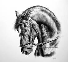 Equine emotions by LeontinevanVliet