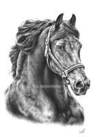 Friesian horse Folmer by LeontinevanVliet
