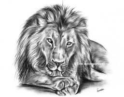 Lion charcoal sketch by LeontinevanVliet