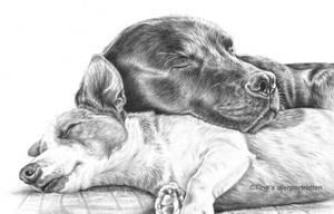 2 sleeping dogs (graphite) by LeontinevanVliet