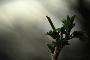 light my life by Lk-Photography