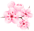 Cherry Blossom Branch by andrajaine
