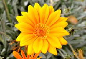 Orange Flower par Allison Christine Martines by FROG-and-TOAD