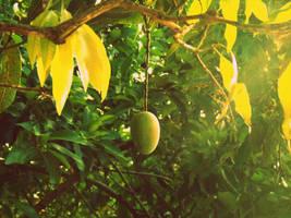 Lonely Mango by twiluv19