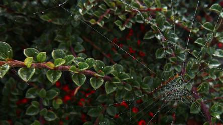 Cobweb III WALLPAPER by Yorphine