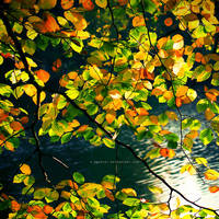 autumn blues by S-Patriot