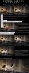 EQUINE COLOUR CHANGE TUTORIAL by devils-horizon