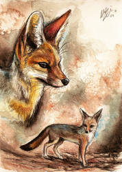 Cape Fox by Culpeo-Fox