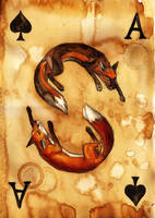 Ace of Spades by Culpeo-Fox
