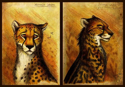 Cheetah by Culpeo-Fox