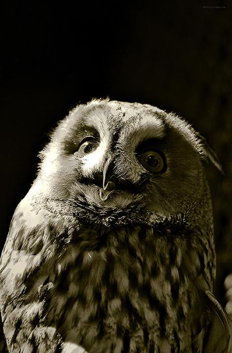 Owl my God by Culpeo-Fox
