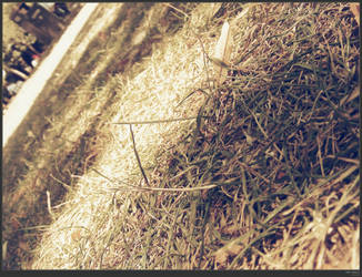 dry grass by simonruddphotos