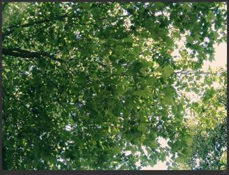 leaf by simonruddphotos