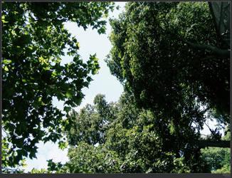 Treetops by simonruddphotos