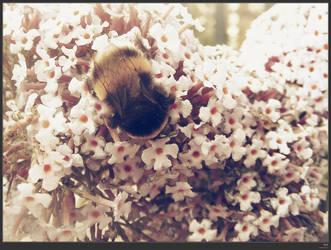 bee by simonruddphotos