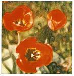 Summer Tulips by PolaroidVanGogh