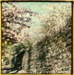 Cherry Blossoms and Stone by PolaroidVanGogh