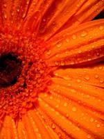 My Beloved Flower by LadyInBlack