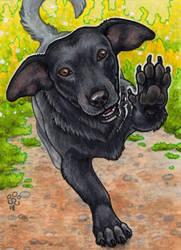 ACEO - Franek by BloodhoundOmega