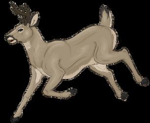 Deer by herdingkats