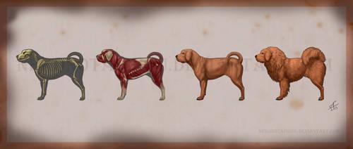Tibetan Mastiff Orthographic Illustrations by nekonotaishou