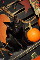Guarding My Pumpkin by nekokushu