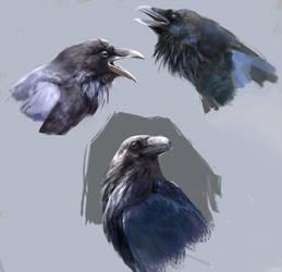 Raven studies by Ketunleipaa