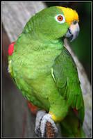 Parrot-fashion by Tsirona