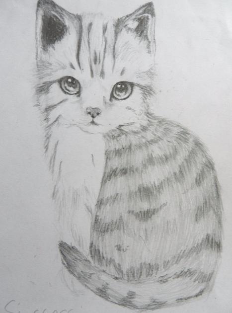 Tabby cat by teapuq
