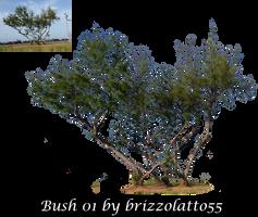 Bush 01 by Brizzolatto55