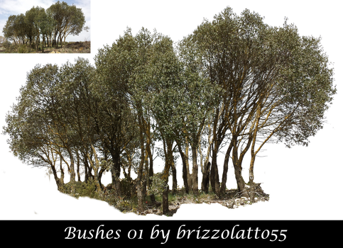 Bushes 01 by Brizzolatto55