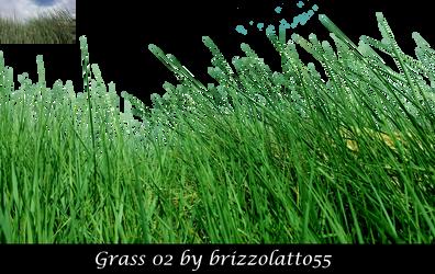 Grass 02 by Brizzolatto55