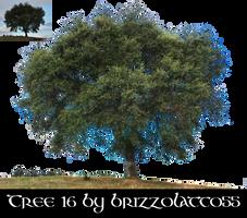 Tree 16 by Brizzolatto55