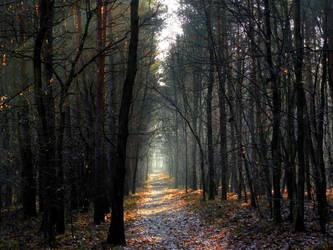 promienna droga lasy kochlowickie by 19Draxa06