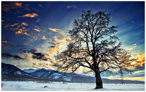 Tree in a Sunset by iustyn