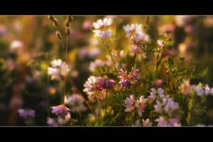 Dreaming of Summer by iustyn