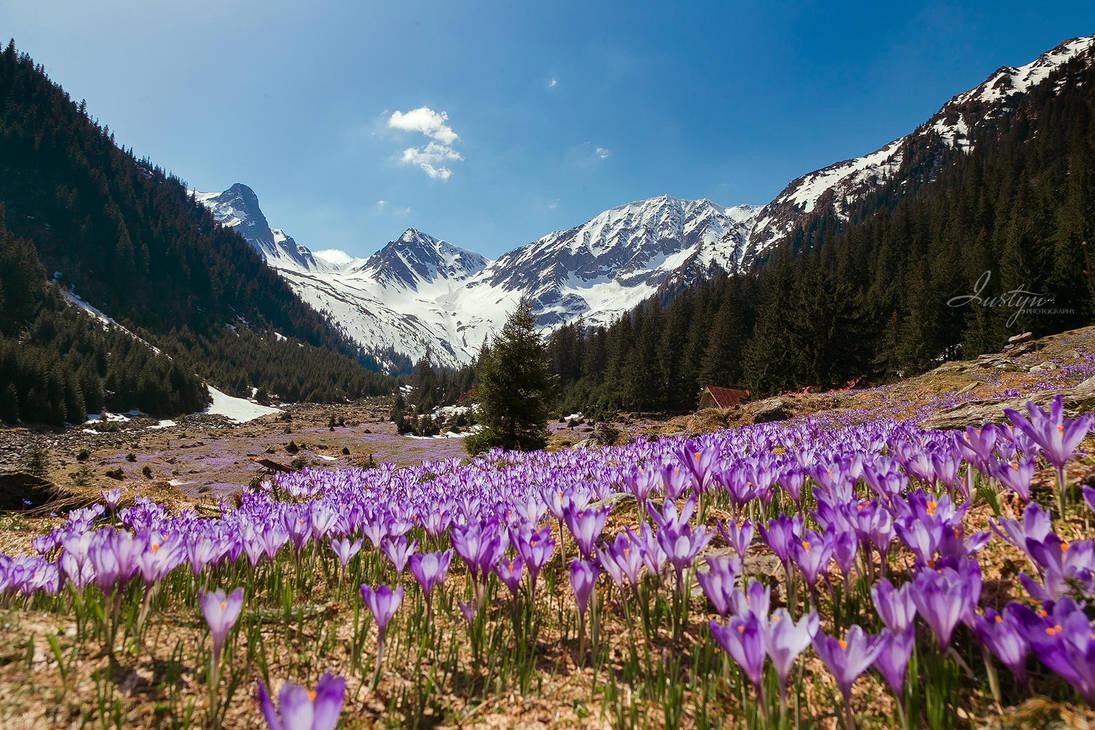 flower moutain by iustyn