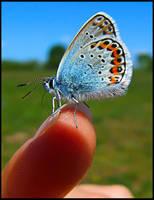 butterfly by iustyn
