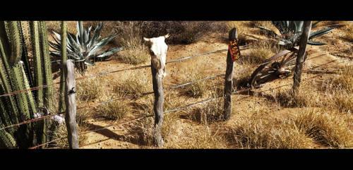 Sonoran Desert by barrymdesigns