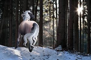 Peppermint Winter by Miss-Mazzira