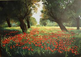poppys by fpista