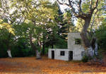 old forest house by ftourini-stock