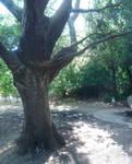 large tree by ftourini-stock