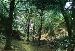 forest panorama by ftourini-stock