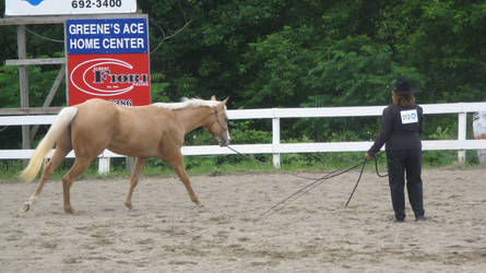 Palomino 004 by vorbei-horse-stock