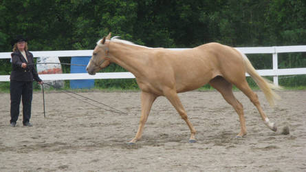 Palomino 005 by vorbei-horse-stock