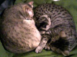 69 Kitties by kissableangel