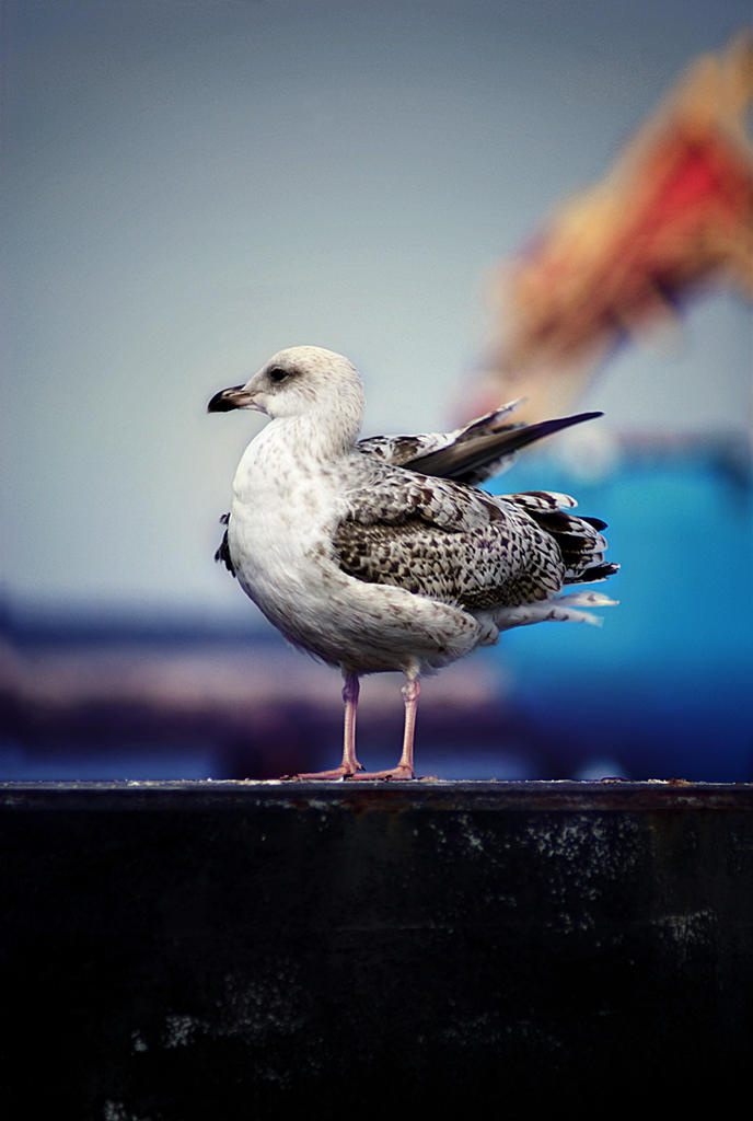 seagull by fluentwater